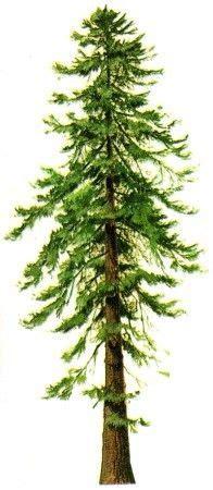 Essay grow more trees in school - spinnakerinnnaplescom